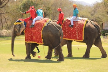 india,jaipur,polo,elephant