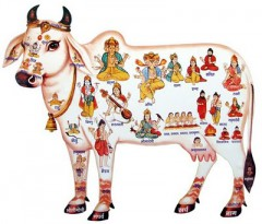 panchagavya,cow,holy cow,hinduism,dung,urine,milk,ghee,buffalo,she-buffalo,calf,bullock,dairy cow,environment,fart,slaughter,beef,meat,vegetarian,non-vegetarien,constitution,law,water buffalo,kambala,kerala,buffalo racing,cow fart,gaz,cow-trafficking